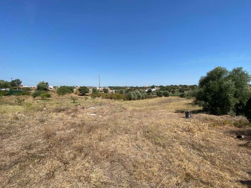 Cartaxo Cartaxo terrain photo 147827