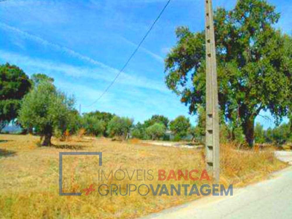 Alcanede Santarém terrain picture 145772