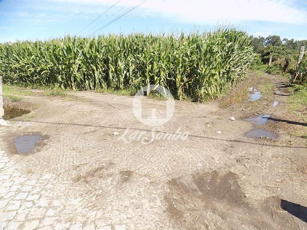 Touguinha Vila Do Conde terrain picture 146451