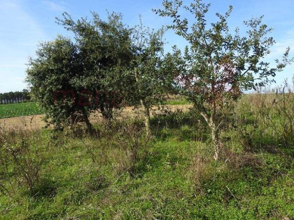 Atalaia Lourinhã terrain picture 168429