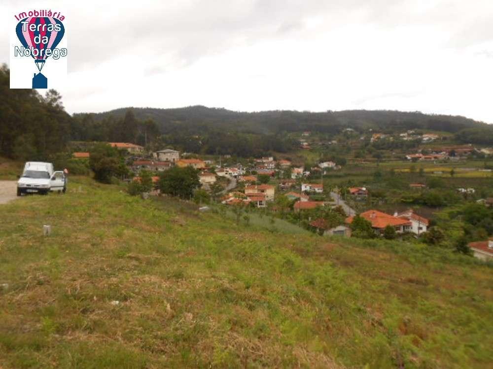Guimarães Guimarães terrain picture 190364