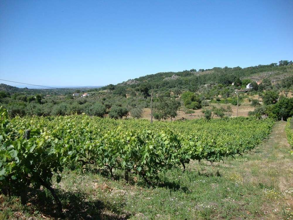 Castelo de Vide Castelo De Vide terrain picture 171362