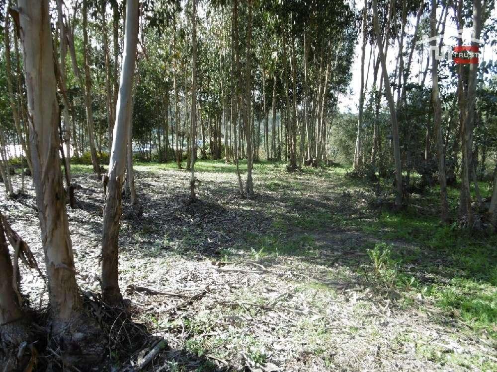 Urqueira Ourém terrain picture 172052