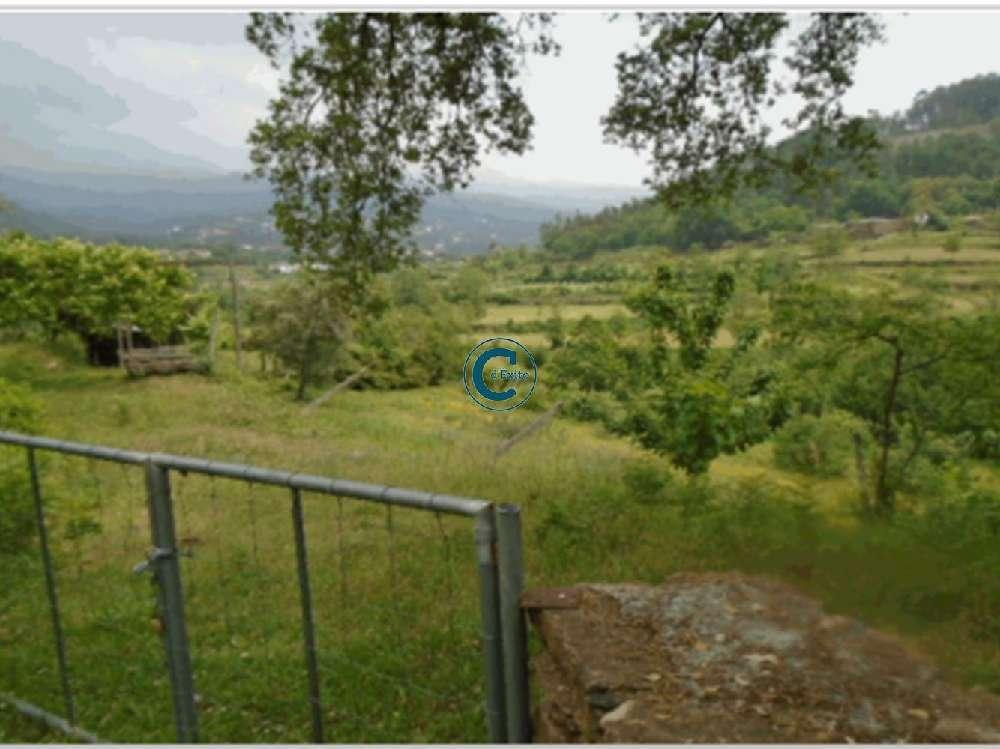 Cinfães Cinfães terrain picture 177626