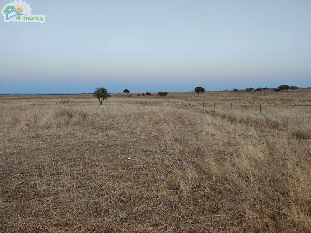 Reguengos de Monsaraz Reguengos De Monsaraz terrain photo 183508