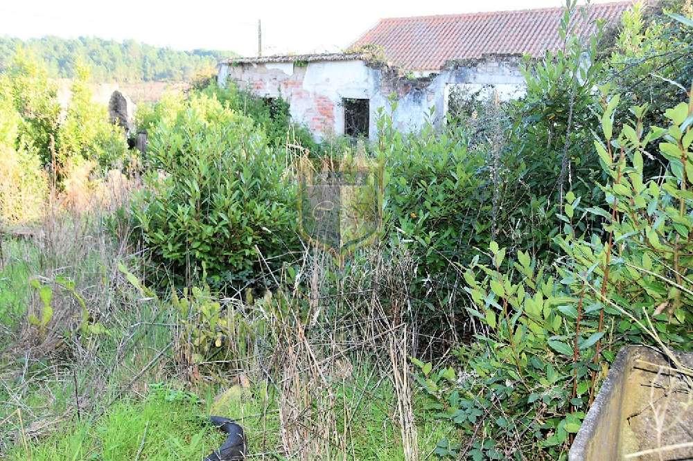 Bombarral Bombarral terrain picture 175737