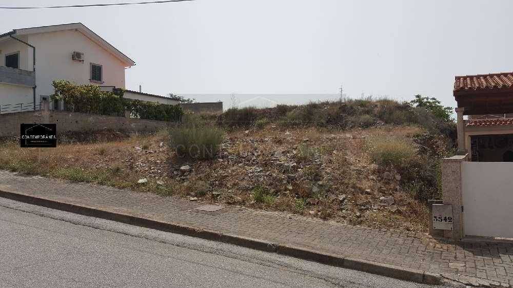 Mirandela Mirandela terrain picture 184979
