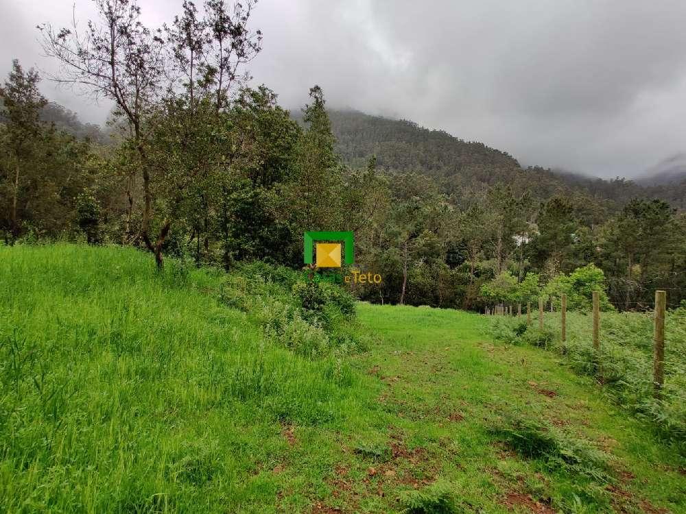 São Vicente São Vicente terrain picture 175962