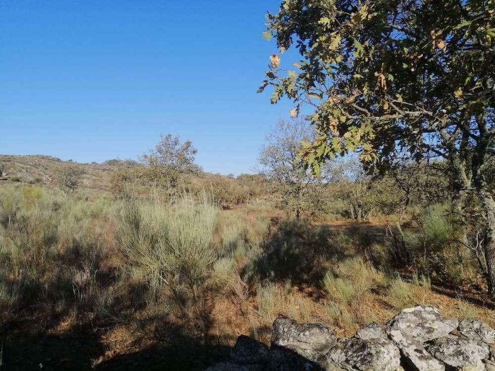 Castelo de Vide Castelo De Vide terrain picture 171393