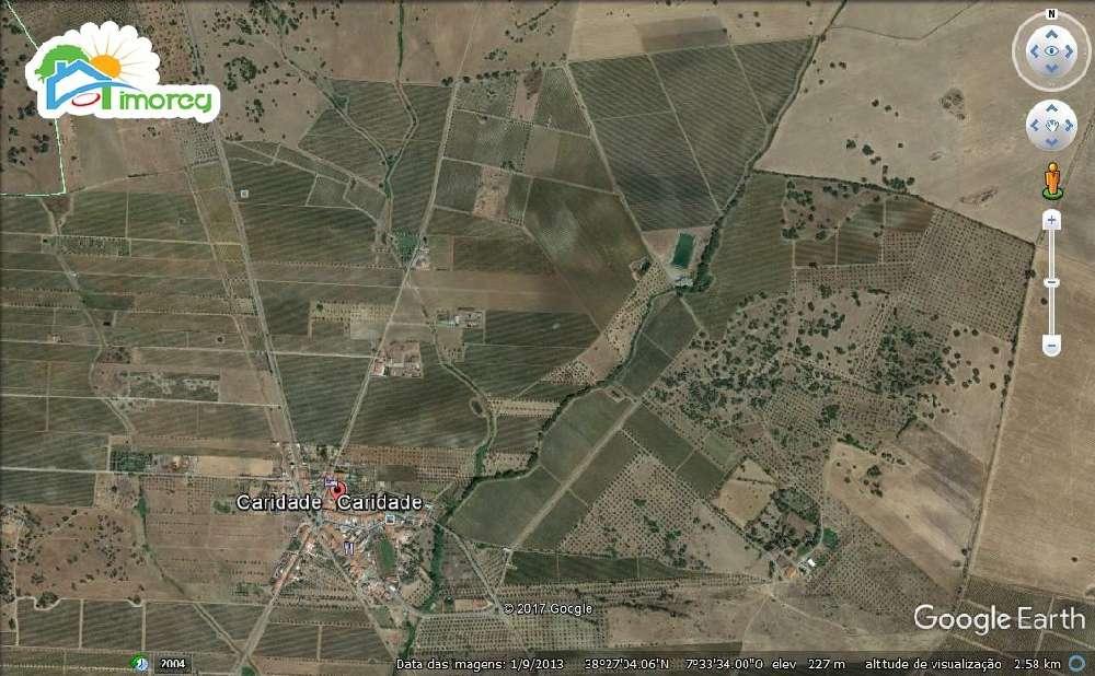 Reguengos de Monsaraz Reguengos De Monsaraz terrain photo 183477