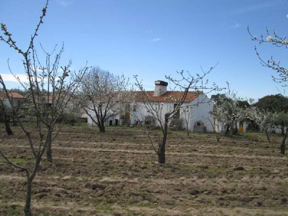 Pitaranha Marvão house picture 171299