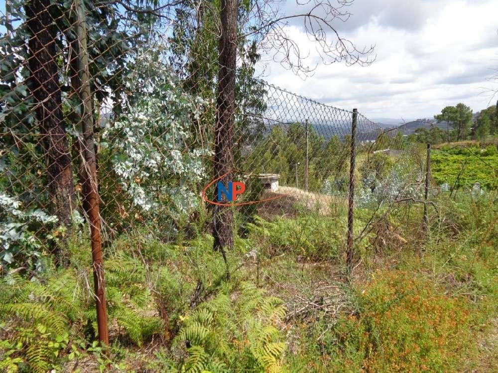 Vizela Vizela terrain photo 186995