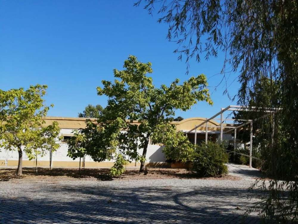 Quinta São Pedro Castelo De Vide house picture 171384