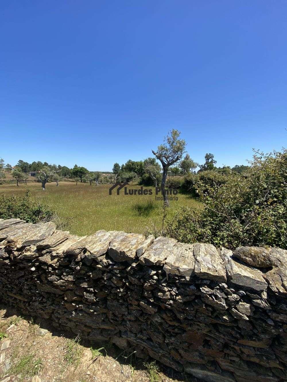 Vila Velha de Ródão Vila Velha De Ródão terrain photo 185894