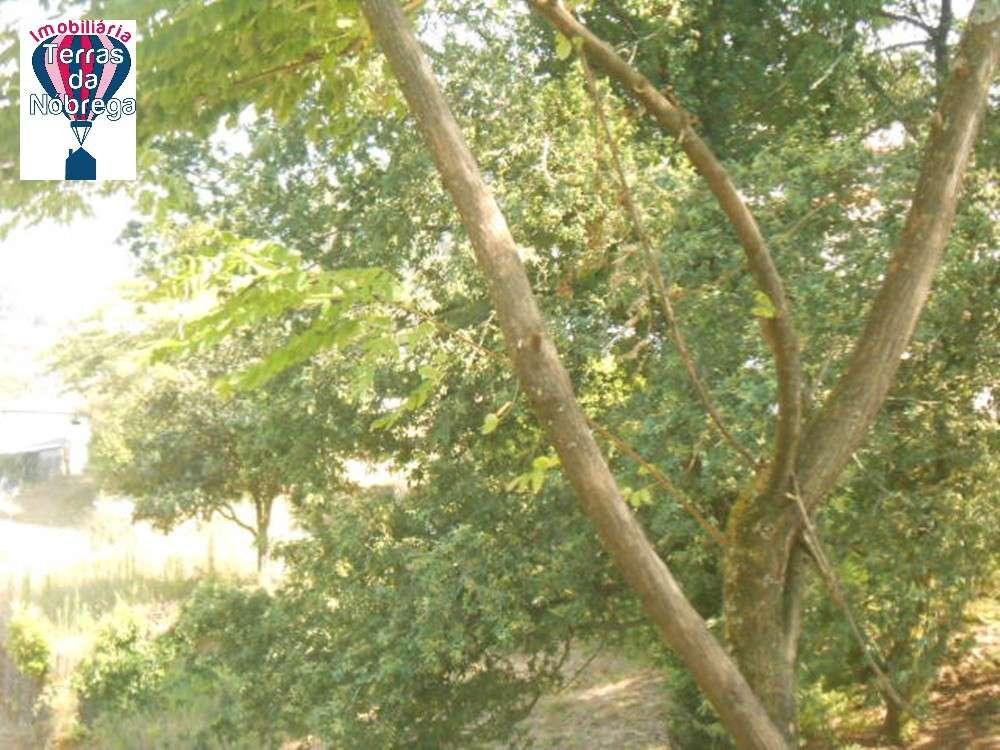 Arcos de Valdevez Arcos De Valdevez terrain picture 190406