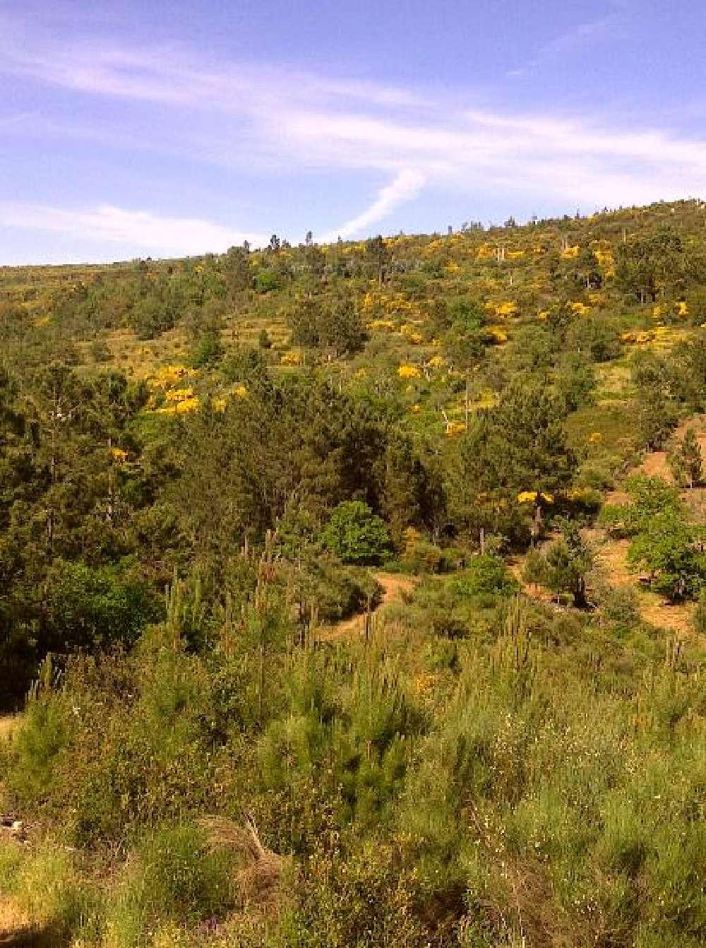 Santo António das Areias Marvão tomt photo 171294
