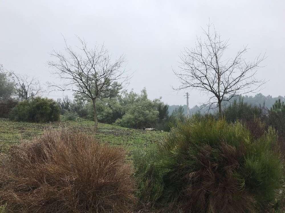 Sabrosa Sabrosa Grundstück Bild 184762