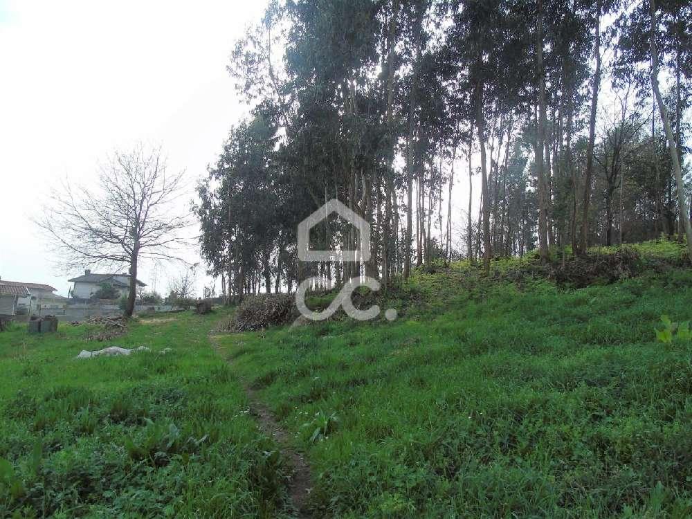 Pedome Vila Nova De Famalicão terrain picture 170016