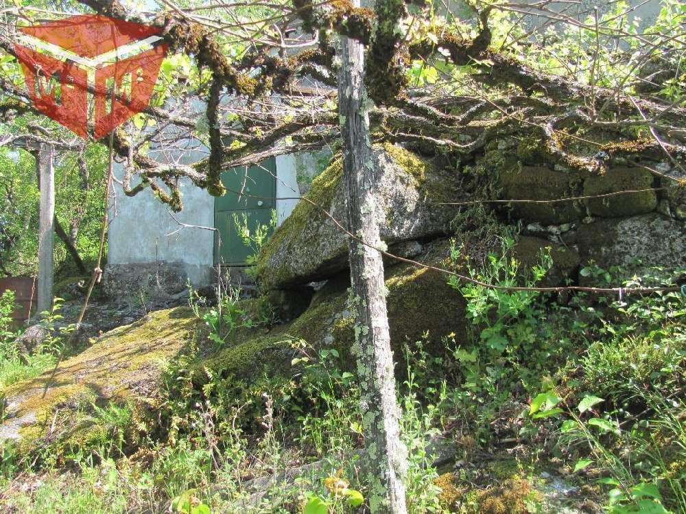 Vieira do Minho Vieira Do Minho Haus Bild 186223