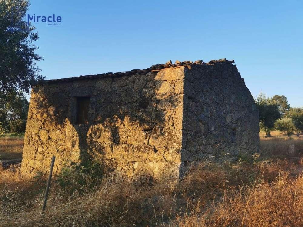 Castelo Branco Castelo Branco house picture 186300