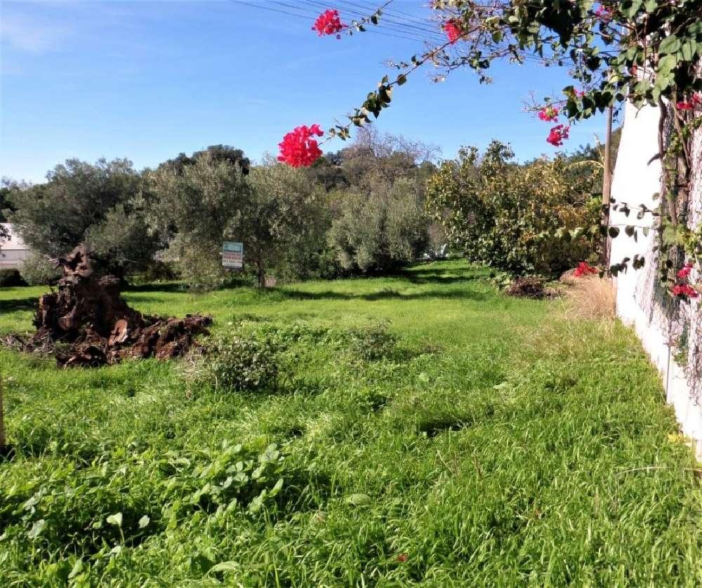 Loulé Loulé Grundstück Bild 168439