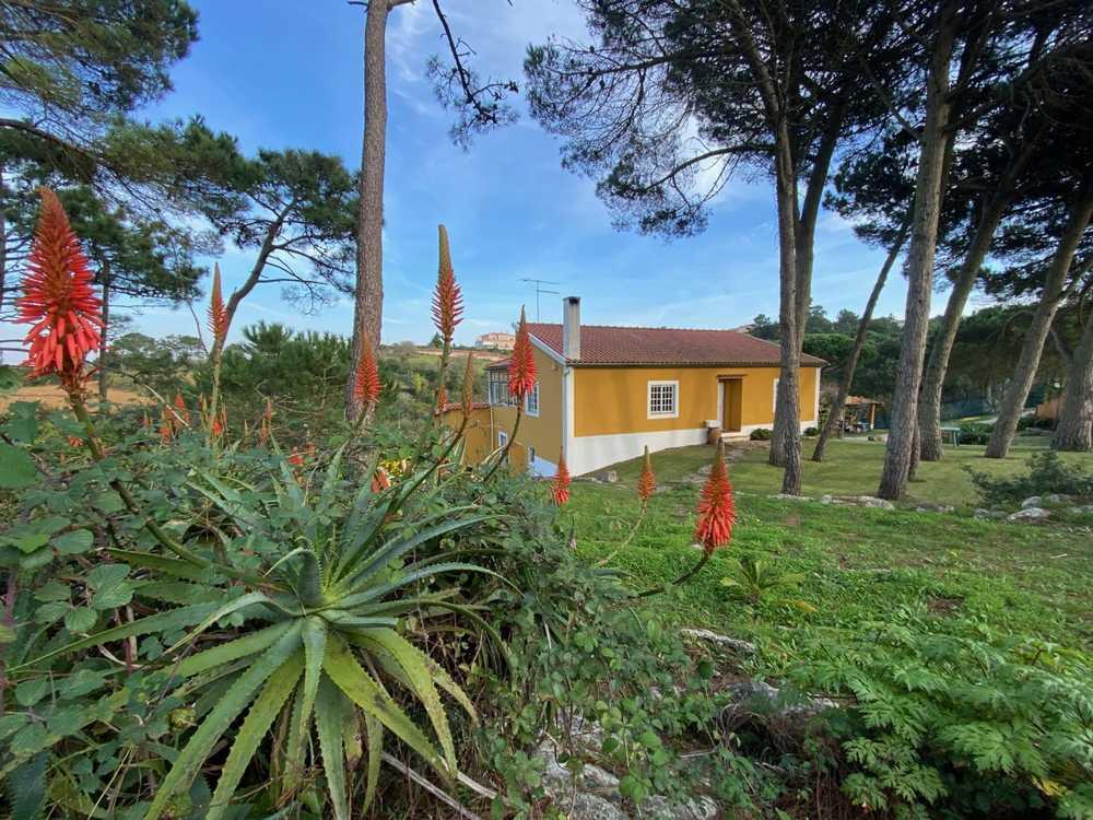 Moita da Roda Leiria house picture 173289