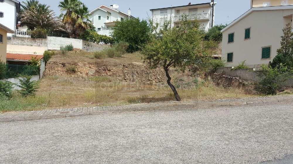 Mirandela Mirandela terrain picture 184980