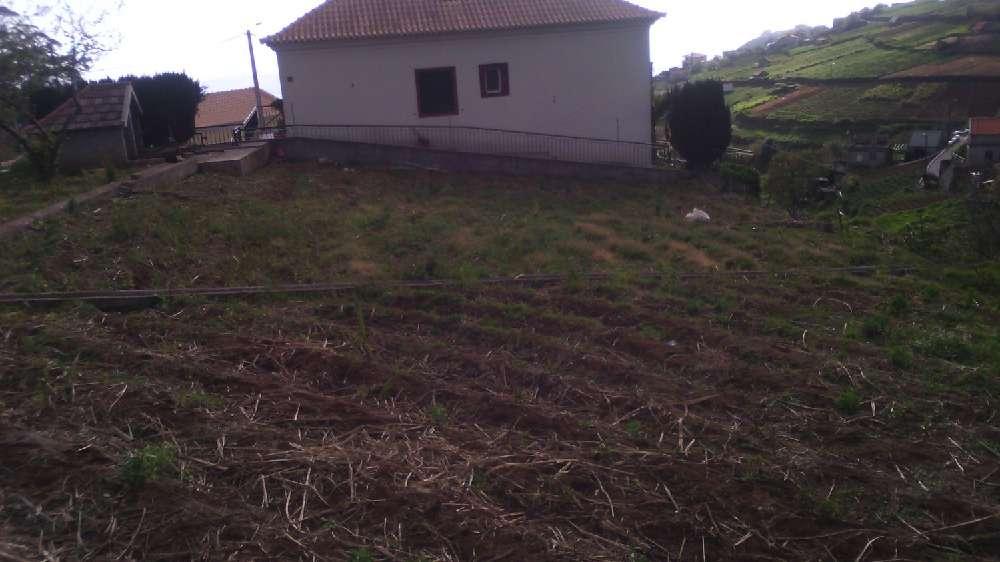 Ponta do Sol Ponta Do Sol terrain photo 186060