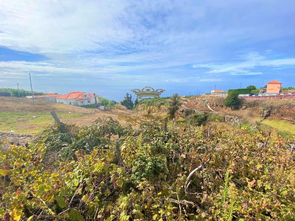 Calheta Calheta (Madeira) terrain picture 185254