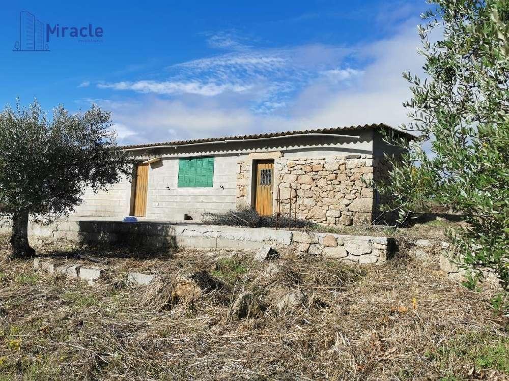 Castelo Branco Castelo Branco house picture 186306