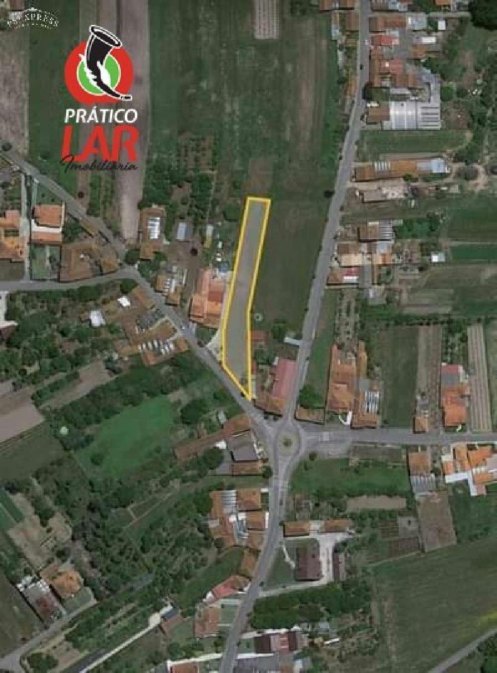 Oliveira do Bairro Oliveira Do Bairro terrain picture 188585