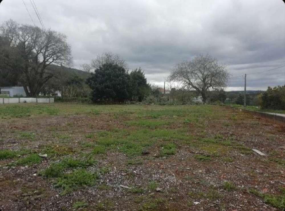 Benedita Alcobaça terrain picture 171790