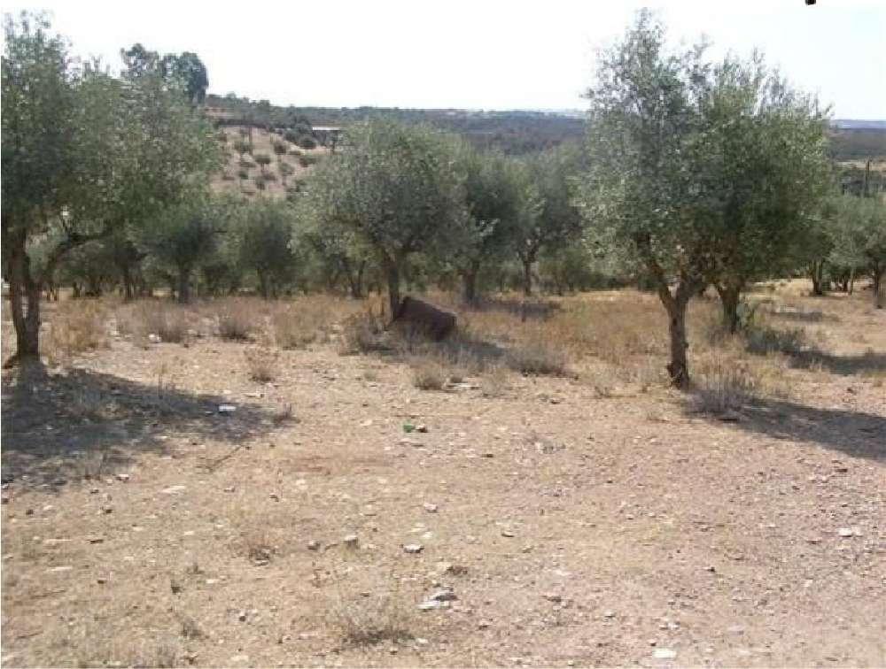 Veiros Estremoz terrain photo 171298