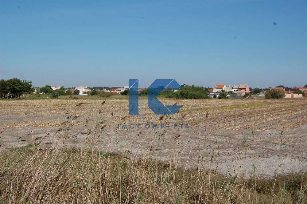 Torreira Murtosa terrain picture 182500