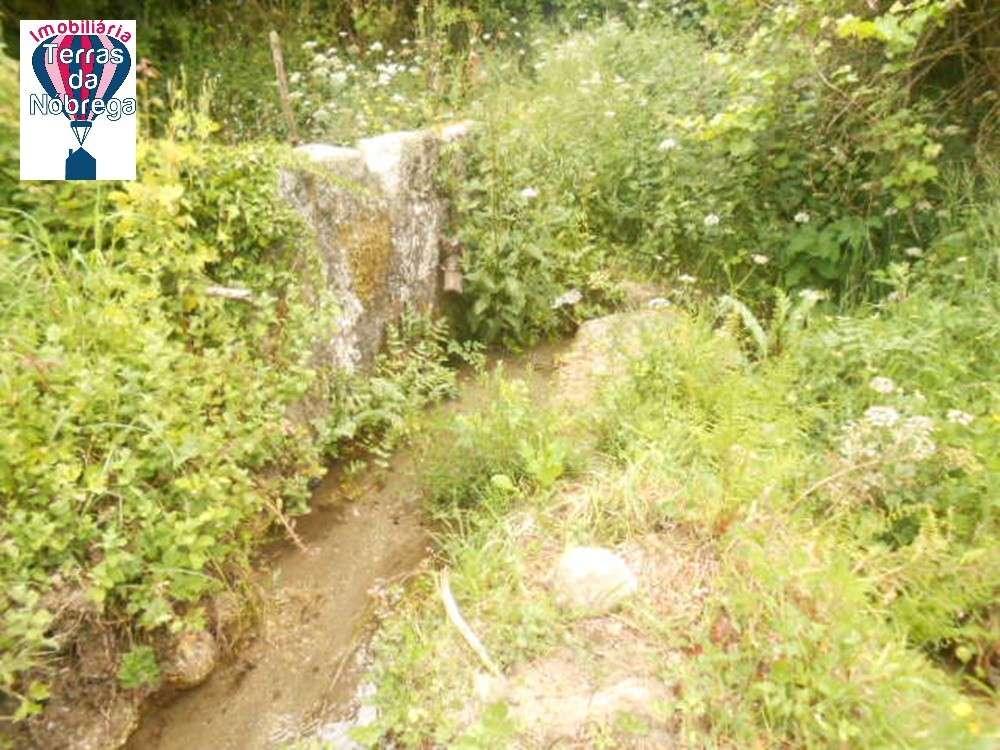 Ponte da Barca Ponte Da Barca terrain picture 190435