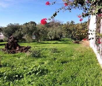 Benafim Loulé Grundstück Bild