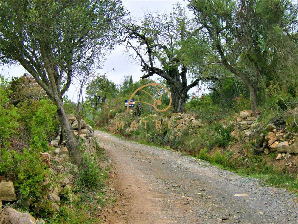 Fuseta Olhão terrain picture 191543