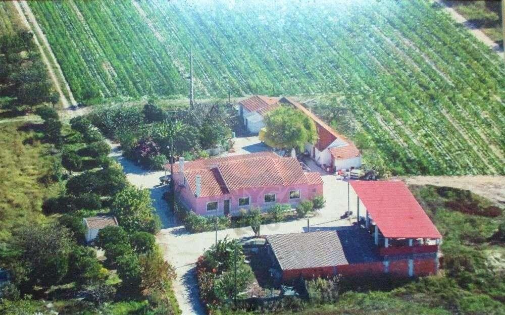 Palmela Palmela hus photo 194371