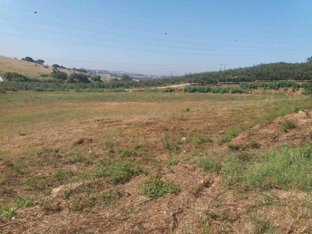 Alcobaça Alcobaça terrain picture 193318