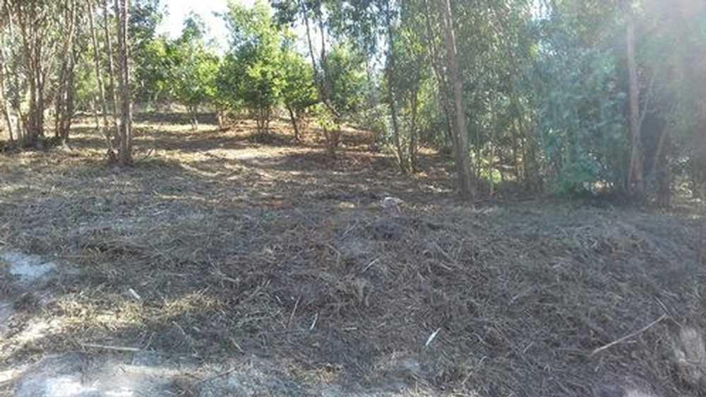 Sobreira Paredes terrain photo 195265