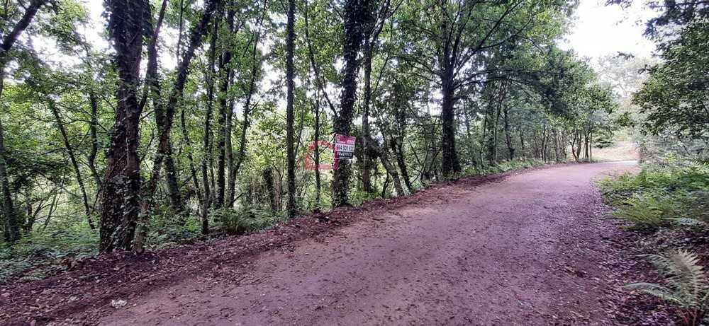 Ribeira Castro Daire terrain photo 195093